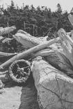 Driftwood στην παραλία στοκ εικόνα με δικαίωμα ελεύθερης χρήσης