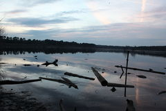 driftwood στη λίμνη Στοκ Εικόνες