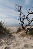 Driftwood στη θάλασσα της Βαλτικής Στοκ φωτογραφία με δικαίωμα ελεύθερης χρήσης