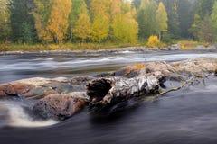 Driftwood στους βράχους Στοκ Φωτογραφίες