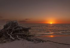Driftwood στο ηλιοβασίλεμα Στοκ Εικόνες