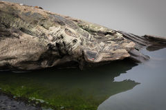 Driftwood στο νερό με το ξηρό βρύο Στοκ Εικόνες