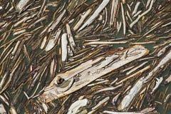 Driftwood στο νερό Στοκ φωτογραφία με δικαίωμα ελεύθερης χρήσης