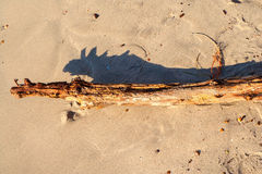 Driftwood бросая тип shdow хамелеона Стоковая Фотография