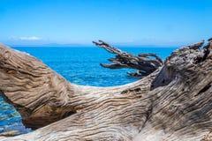 Driftwood в океане Стоковые Фото