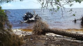 Driftwood моря стоковая фотография rf