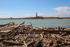 driftwood на береге В зоне Перепаде del Po, Италии Стоковая Фотография RF