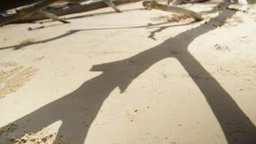 Driftwood на бечевнике сток-видео
