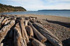 Driftwood на заходе солнца Стоковая Фотография