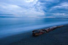 Driftwood на песчаном пляже на южном береге, пункте сливы, ямайке Стоковое фото RF