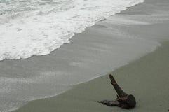 Driftwood на песчаном пляже Стоковая Фотография