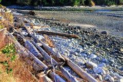 Driftwood на пляже на времени захода солнца стоковое изображение rf
