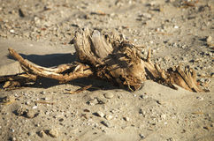 Driftwood на пляже Стоковое Фото