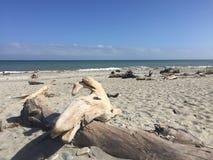 Driftwood на пляже Стоковое Изображение