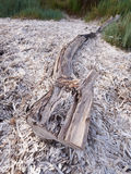 Driftwood на пляже Стоковое фото RF