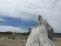 Driftwood на пляже Стоковые Изображения RF