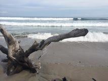 Driftwood океана Стоковые Фото