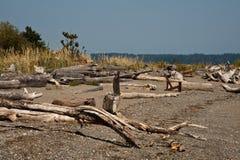 Driftwood острова Bainbridge Стоковые Изображения