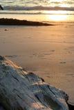 driftwood пляжа стоковое изображение