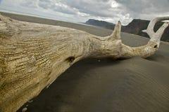Driftwood пляжа Karekare Стоковые Изображения