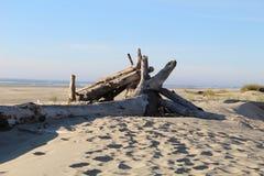 driftwood стоковые фото