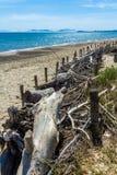 Driftwood штабелированный на солнечном пляже Стоковое фото RF