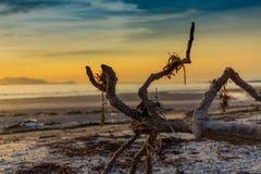driftwood στοκ εικόνα με δικαίωμα ελεύθερης χρήσης