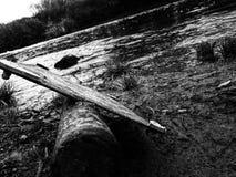 driftwood Fotos de Stock