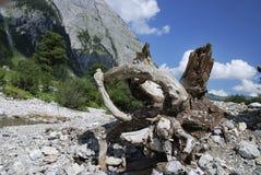 driftwood Zdjęcia Stock