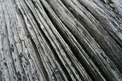Driftwood. Old driftwood tree trunk abstract background Stock Photography
