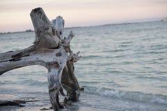 driftwood Zdjęcie Royalty Free