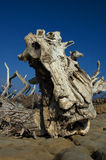 Driftwood. On a small deserted island in the Adriatic Sea, Croatia royalty free stock photos
