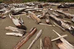 Driftwood. A stock photo of some driftwood along the beach royalty free stock image