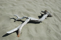 Driftwood. On the sand beach royalty free stock photography