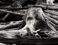 Driftwood Royalty Free Stock Photos