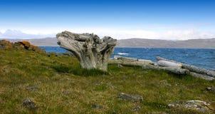 driftwood Στοκ φωτογραφία με δικαίωμα ελεύθερης χρήσης