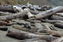 Driftwood Immagine Stock