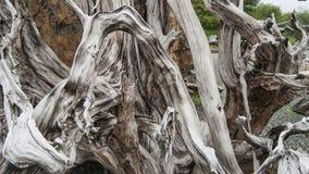 Driftwood Stock Image