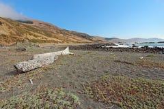 Пляж и driftwood камушка на Калифорния плавают вдоль побережья Стоковые Фотографии RF