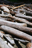 Driftwood royaltyfri bild