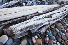 Driftwood Immagine Stock