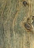 driftwood fotografia royalty free