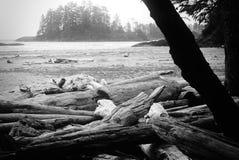 Driftwood Стоковое Изображение