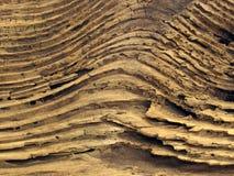 driftwood royaltyfri fotografi