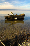 Driftwood  Stock Images