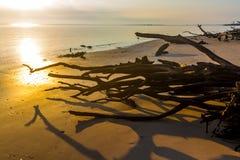 driftwood zdjęcie stock