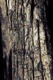 driftwood Fotos de archivo libres de regalías