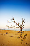 driftwood Imagen de archivo libre de regalías