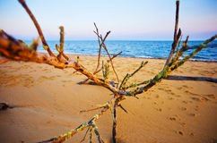 driftwood Foto de Stock