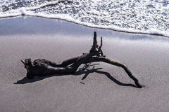driftwood Fotografía de archivo libre de regalías
